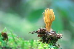 Малые toadstools грибов Стоковое Изображение RF