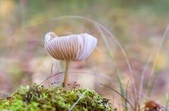 Малые toadstools Стоковое фото RF