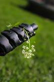 Малый белый цветок Стоковые Фото