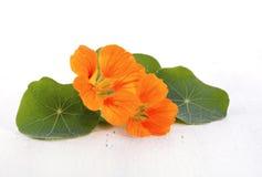 Малый букет съестных цветков настурции Стоковое Изображение