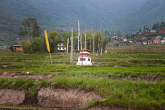 Малый висок в рисовых полях стоковые изображения rf