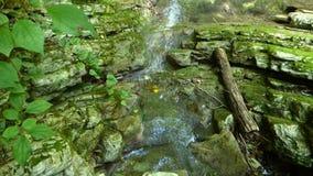 Малый водопад в лесе, взгляд сверху акции видеоматериалы