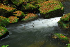 Малый водопад в национальном парке Czechswitzerland Стоковая Фотография RF
