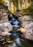 Малый водопад на потоке на больших падениях паркует, Вирджиния Стоковое Изображение