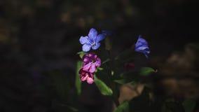 Малый голубой цветок поля Стоковые Фотографии RF