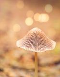 Малый грибок в лесе Стоковые Фотографии RF