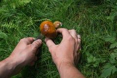 Малый гриб режет человека Стоковая Фотография RF