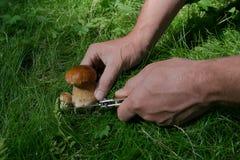 Малый гриб режет человека Стоковое Изображение