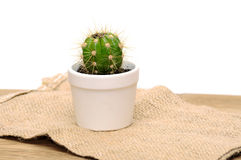 Малый декоративный кактус в баке Стоковое фото RF