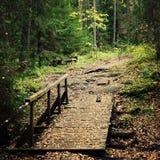 Малый деревянный мост в острове Valaam леса Стоковое Изображение