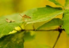 Малый жук стоя на зеленых лист Стоковое Изображение RF