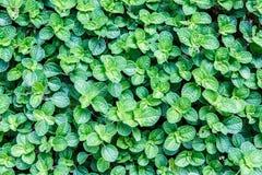 Малый зеленый цвет выходит конспект Стоковые Изображения