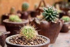 малый кактус на таблице Стоковое Изображение