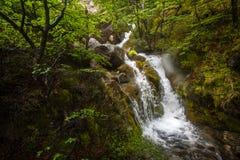Малый каскадируя водопад в горах Shevelev Стоковая Фотография RF