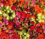 Малый конец букета роз вверх Стоковые Изображения