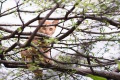 Малый коричневый кот Стоковое Изображение