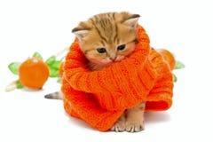 Малый котенок в связанном свитере Изолировано на белизне Стоковая Фотография