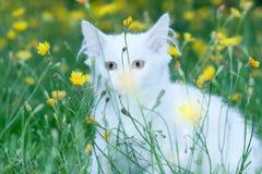 Малый котенок сидя в цветках стоковые фотографии rf