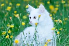 Малый котенок сидя в цветках стоковое фото