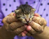 Малый кот Стоковое Фото