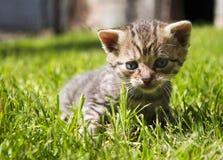 Малый кот Стоковые Фото