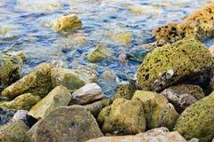 Малый краб сидя на камнях Стоковые Изображения RF
