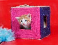Малый красный и белый котенок выходит царапать столбы на красном цвете Стоковые Изображения