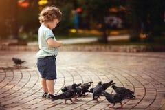 Малый мальчик подает голуби Стоковые Фото