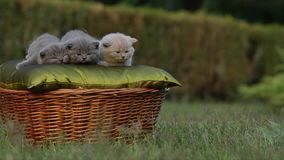 Малый милый котенок в саде видеоматериал