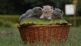 Малый милый котенок в саде сток-видео