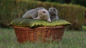 Малый милый котенок meowing в саде видеоматериал