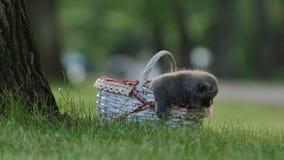 Малый милый котенок meowing сток-видео