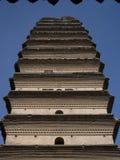 Малый одичалый Pagoda гусыни стоковые изображения