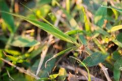 Малый паук в траве Стоковое Изображение RF