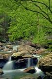 Малый поток белой воды в Smokies Стоковое Изображение RF