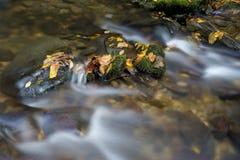Малый поток белой воды с падением выходит. Стоковые Фотографии RF