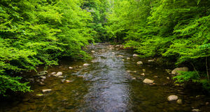 Малый поток, на большом национальном парке закоптелых гор, Tennesse стоковое изображение rf