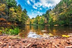 Малый пруд в лесе в падении Стоковые Фото