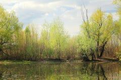 Малый пруд в лесе Стоковое Фото