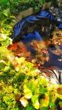 Малый пруд Стоковые Фото
