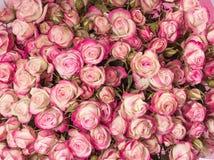 Малый розовый конец букета роз вверх Стоковые Изображения RF