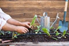 Малый сад артишоков Стоковое Фото