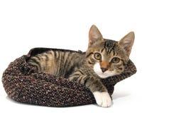 Кот в шлеме Стоковая Фотография RF