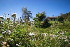 Малый сельский дом Стоковые Изображения RF