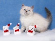 Малый сибирский котенок и оформление xmas Стоковое Изображение