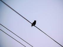 Малый силуэт птицы на проводе n небо Стоковое Изображение