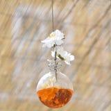 Малый стеклянный висеть ваз Стоковая Фотография RF