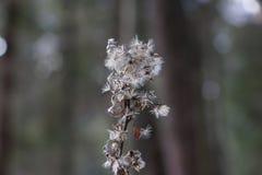 Малый сухой grеy цветок Стоковое Фото