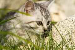 Малый цвета песк котенок на зеленой траве Стоковые Изображения RF