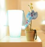 Малый цветок в баке на таблице, орхидея голубой орхидеи около лампы ночи Стоковое фото RF